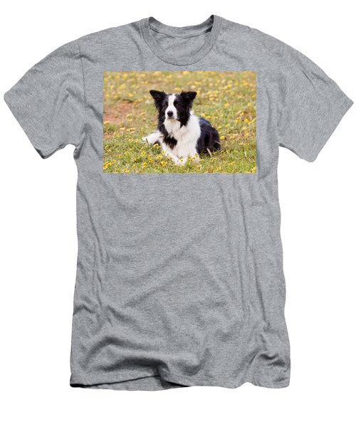 Border Collie In Field Of Yellow Flowers Men's T-Shirt (Athletic Fit)