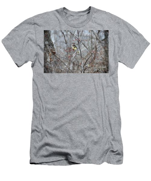 Cedar Wax Wing 3 Men's T-Shirt (Slim Fit) by David Arment