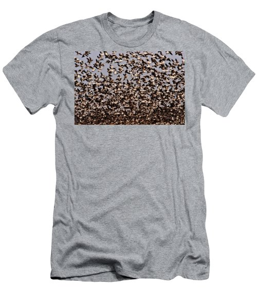 Duck Wall Men's T-Shirt (Athletic Fit)