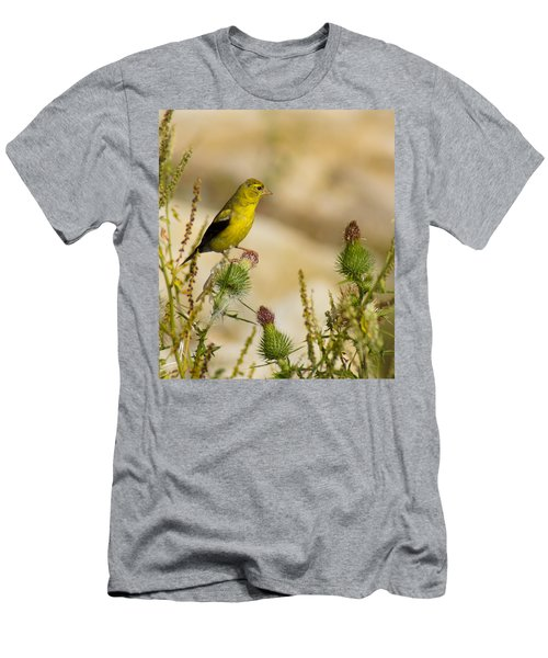 Goldfinch On Lookout Men's T-Shirt (Athletic Fit)