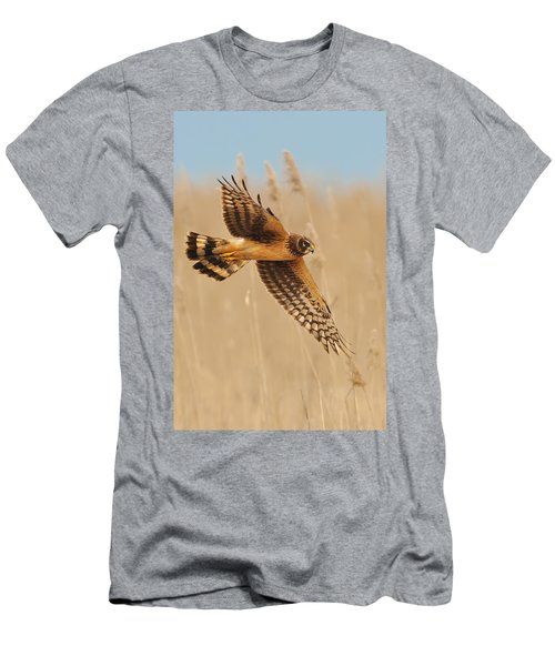 Harrier Over Golden Grass Men's T-Shirt (Athletic Fit)
