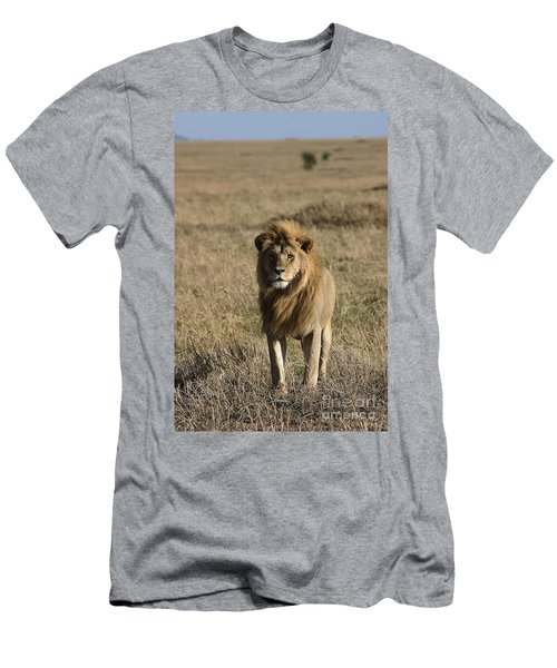 Male Lion's Gaze Men's T-Shirt (Slim Fit) by Darcy Michaelchuk