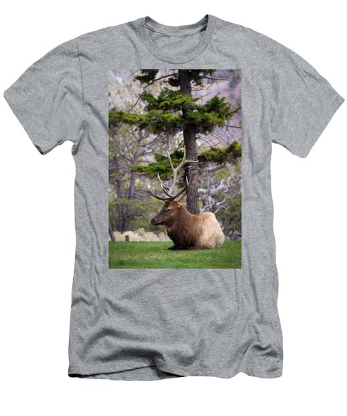 On The Grass Men's T-Shirt (Slim Fit) by Steve McKinzie