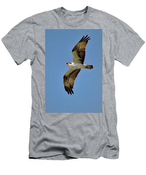 Osprey Above Men's T-Shirt (Athletic Fit)