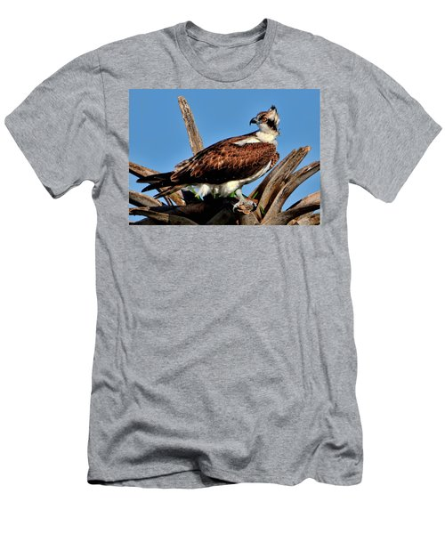 Osprey On A Windy Morning Men's T-Shirt (Athletic Fit)