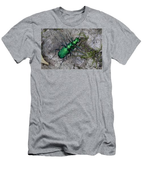 Six-spotted Tiger Beetles Copulating Men's T-Shirt (Slim Fit) by Daniel Reed