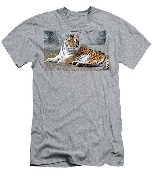 Tiger Resting Men's T-Shirt (Athletic Fit)