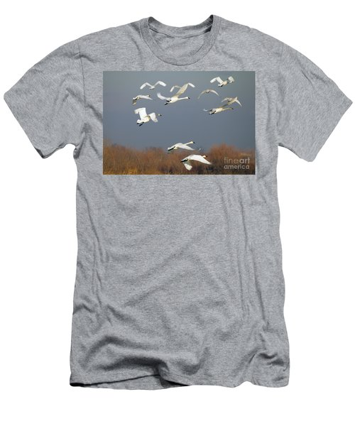 Tundra Swan Takeoff Men's T-Shirt (Athletic Fit)