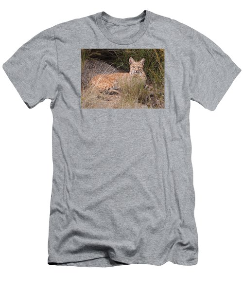 Bobcat At Rest Men's T-Shirt (Athletic Fit)