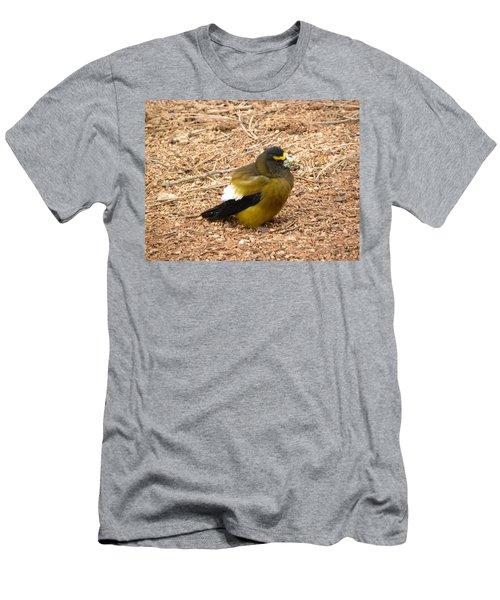 Evening Grossbeak Divide Co Men's T-Shirt (Athletic Fit)