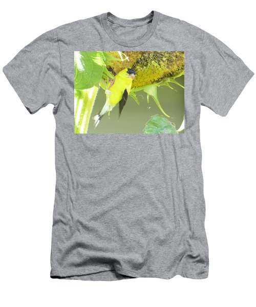 American Goldfinch On Sunflower Men's T-Shirt (Athletic Fit)