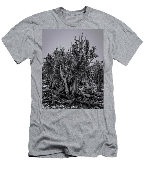 Ancient Bristlecone Pine Men's T-Shirt (Athletic Fit)