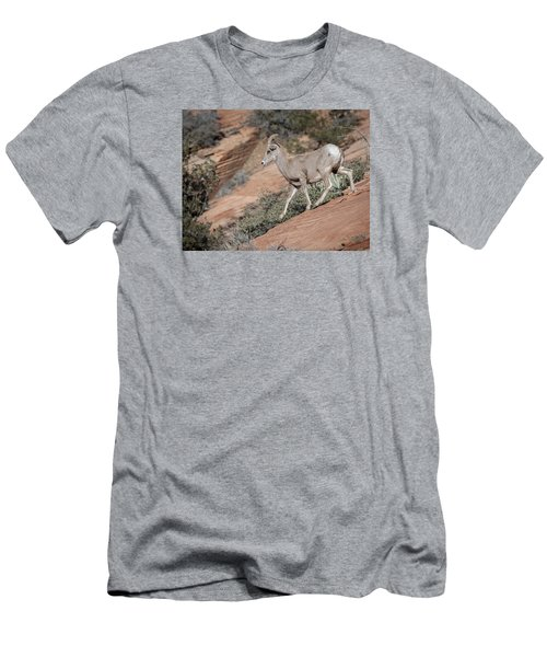 Men's T-Shirt (Slim Fit) featuring the photograph Big Horn Sheep by Tyson and Kathy Smith