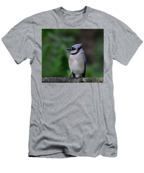 Blue Jay Men's T-Shirt (Slim Fit) by Diane Giurco