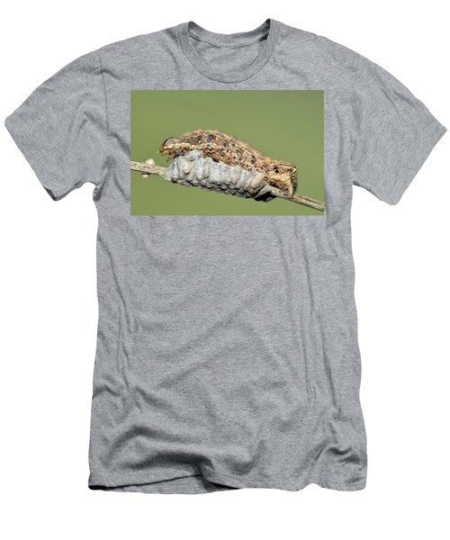 Caterpillar And Parasitic Wasp Eggs Men's T-Shirt (Athletic Fit)