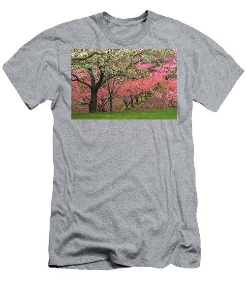 Fruit Orchard Men's T-Shirt (Slim Fit) by Utah Images