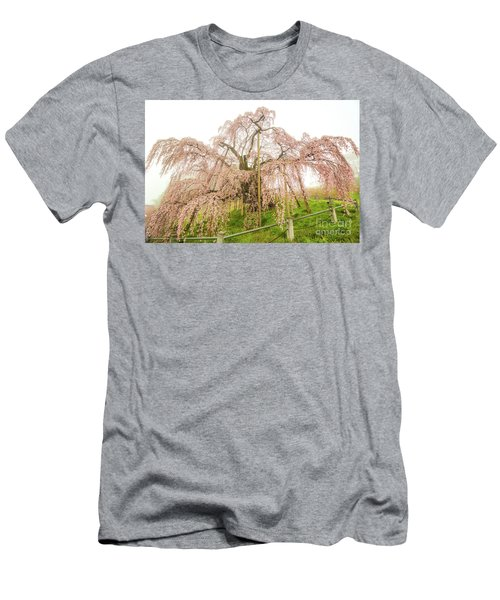Miharu Takizakura Weeping Cherry02 Men's T-Shirt (Slim Fit) by Tatsuya Atarashi