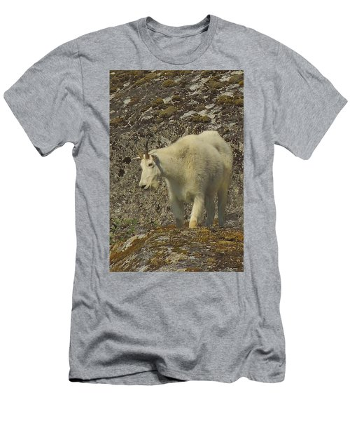 Mountain Goat Ewe Men's T-Shirt (Athletic Fit)