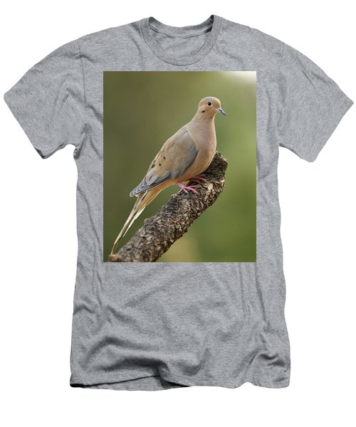 Men's T-Shirt (Slim Fit) featuring the photograph Mourning Dove by Doug Herr
