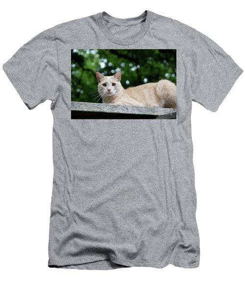 Orange Tabby Men's T-Shirt (Athletic Fit)