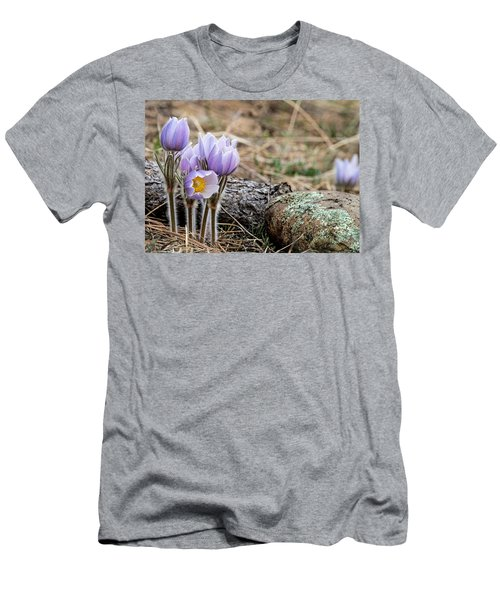 Pasque Flower Men's T-Shirt (Athletic Fit)