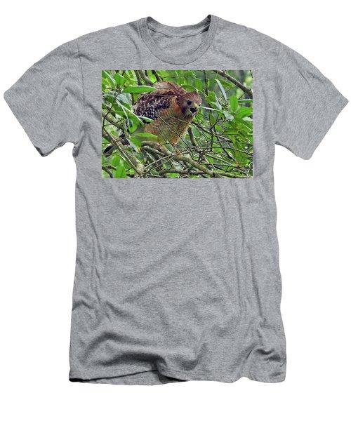 Red-shouldered Hawk Men's T-Shirt (Athletic Fit)