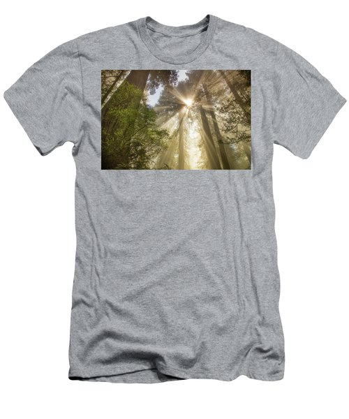 Redwoods Sunburst Men's T-Shirt (Athletic Fit)