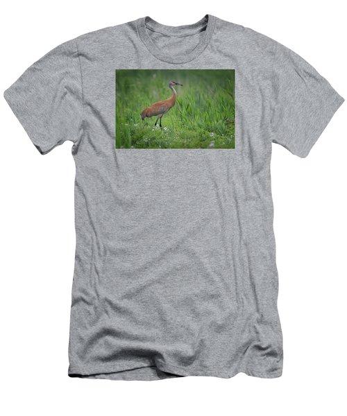 Sandhill Crane Men's T-Shirt (Slim Fit) by Gary Hall