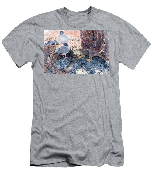 Swallow Tailed Gull And Iguana On  Galapagos Islands Men's T-Shirt (Athletic Fit)