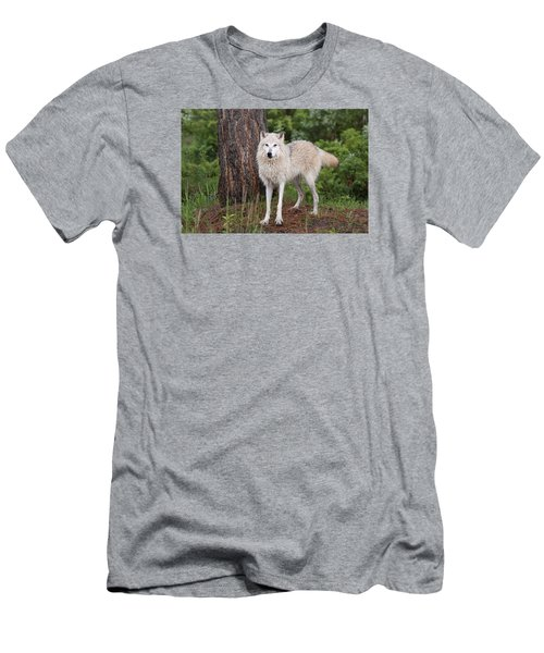 White Wolf. Men's T-Shirt (Athletic Fit)