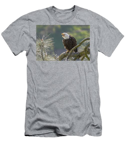 Bald Eagle Men's T-Shirt (Slim Fit) by Doug Herr