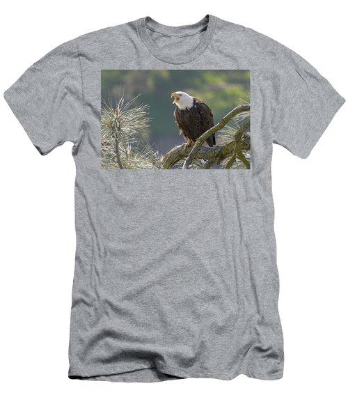 Bald Eagle Men's T-Shirt (Slim Fit)