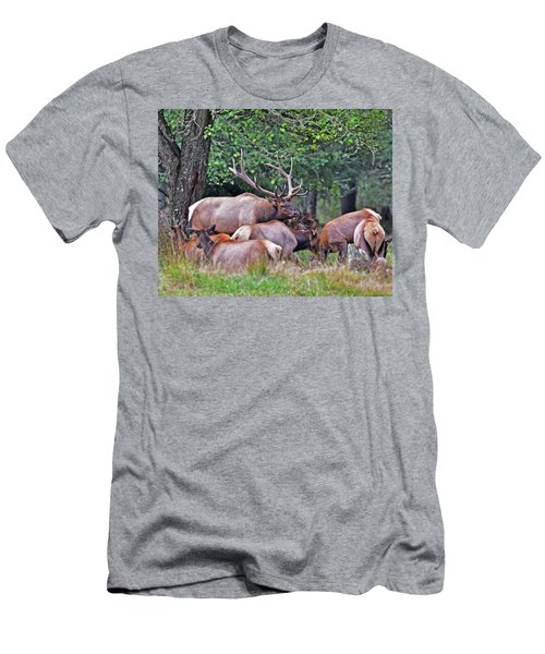 Royal Roosevelt Bull Elk Men's T-Shirt (Athletic Fit)
