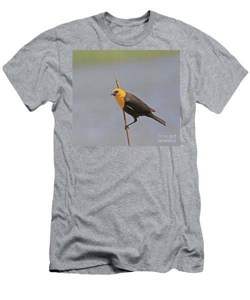 Yellow Headed Blackbird Men's T-Shirt (Athletic Fit)