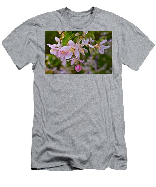 2015 Spring At The Gardens White Crabapple Blossoms 1 Men's T-Shirt (Athletic Fit)