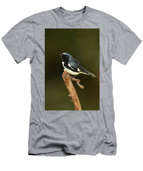 Black-throated Blue Warbler Men's T-Shirt (Slim Fit) by Alan Lenk