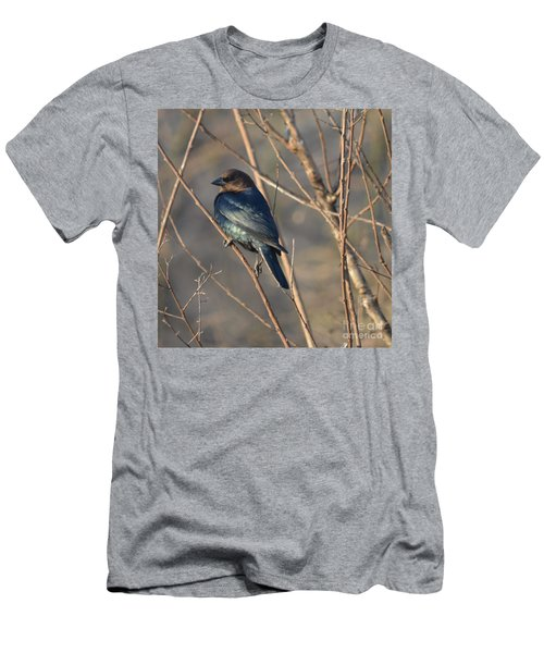 Brown Headed Cowbird Men's T-Shirt (Athletic Fit)