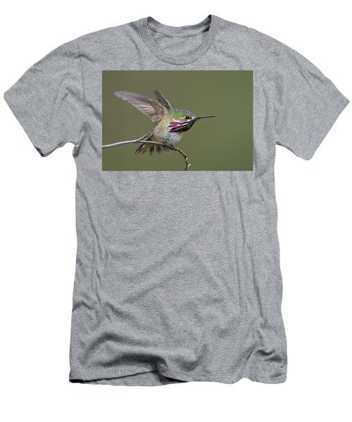 Calliope Hummingbird Men's T-Shirt (Slim Fit) by Doug Herr