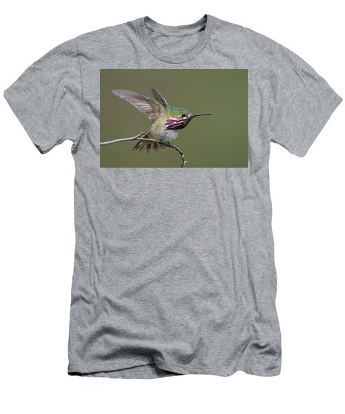 Calliope Hummingbird Men's T-Shirt (Athletic Fit)