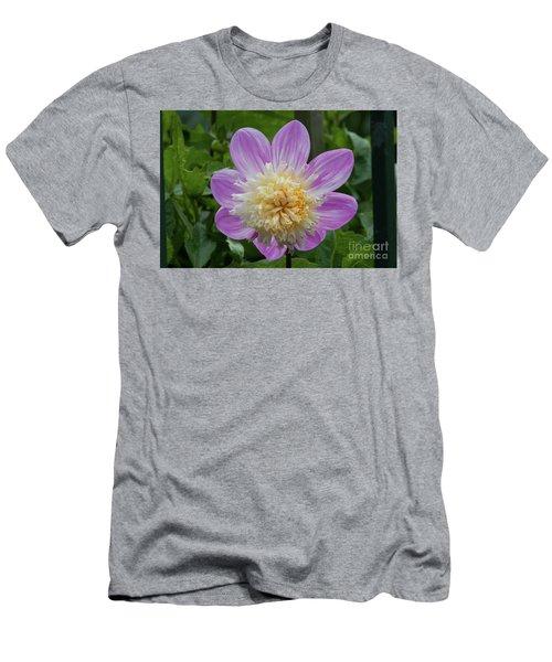 Golden Gate Park Dahlia Men's T-Shirt (Athletic Fit)