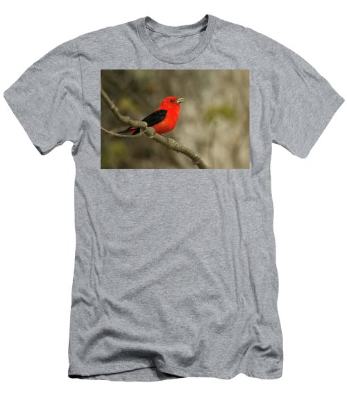 Scarlet Tanager Men's T-Shirt (Slim Fit) by Alan Lenk