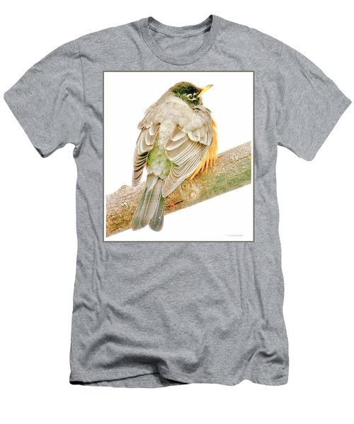 American Robin Male, Animal Portrait Men's T-Shirt (Athletic Fit)