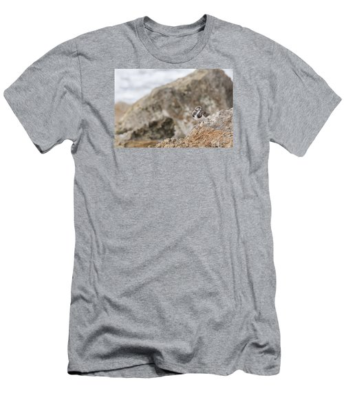 A Ruddy Turnstone Perched On The Rocks Men's T-Shirt (Athletic Fit)