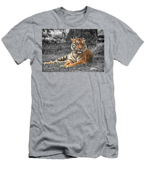 A Tiger Relaxing On A Cool Afternoon II Men's T-Shirt (Athletic Fit)