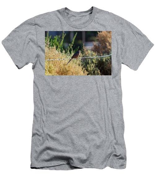 Abert's Towhee Men's T-Shirt (Athletic Fit)