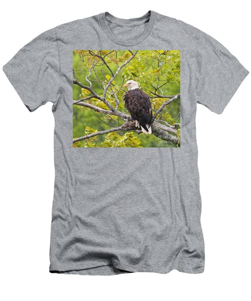 Men's T-Shirt (Slim Fit) featuring the photograph Adult Bald Eagle by Debbie Stahre