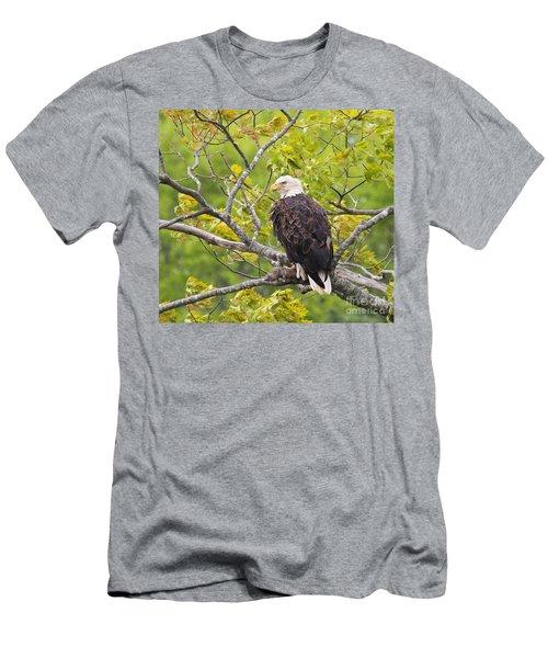 Adult Bald Eagle Men's T-Shirt (Athletic Fit)