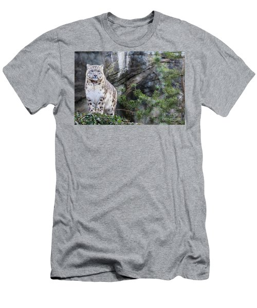 Adult Snow Leopard Standing On Rocky Ledge Men's T-Shirt (Athletic Fit)
