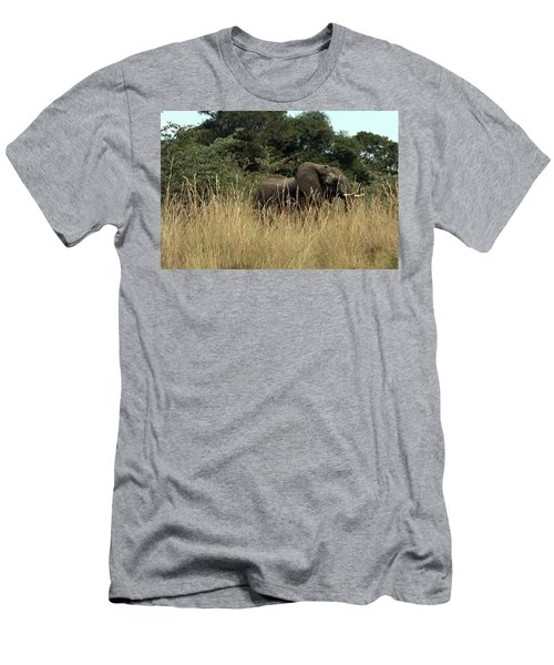 African Elephant In Tall Grass Men's T-Shirt (Athletic Fit)