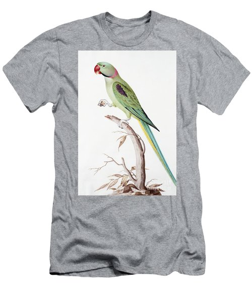 Alexandrine Parakeet Men's T-Shirt (Athletic Fit)